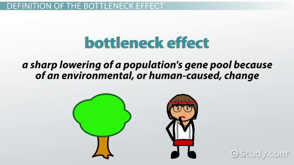 Bottleneck Effect: Definition & Example - Video & Lesson ...