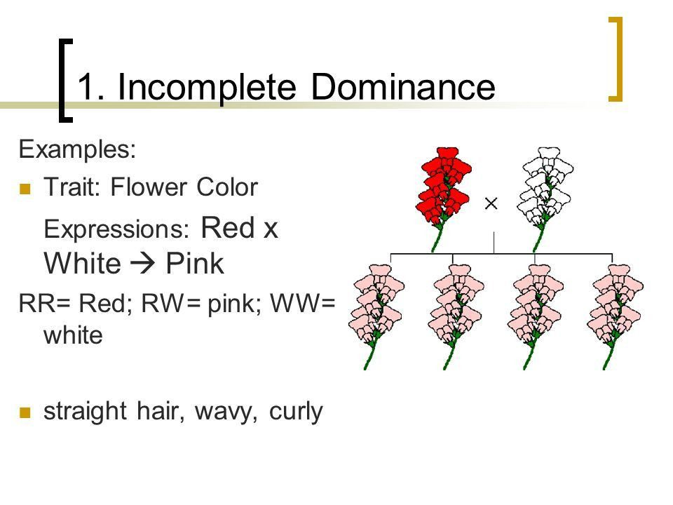 Incomplete Dominance & Codominance Section 11-3 in Book. - ppt ...