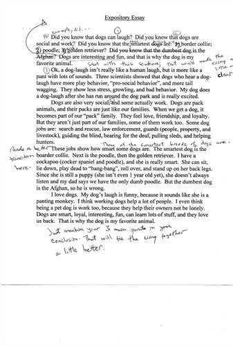 animal testing essay thesis