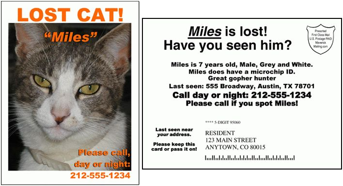 Lost dog, lost cat, lost pet postcard mailing help. Advanced ...