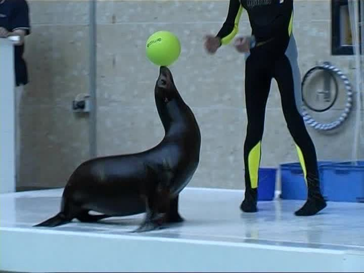 Sea Lion / Zoo / Germany | SD Stock Video 574-060-923 | Framepool ...