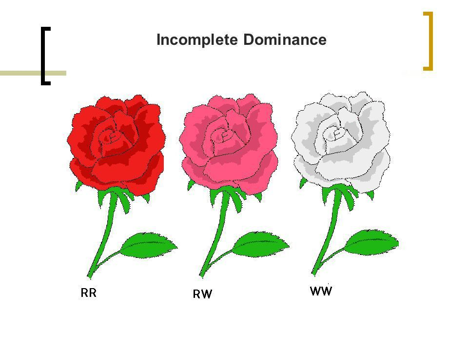 Incomplete Dominance & Codominance - ppt video online download