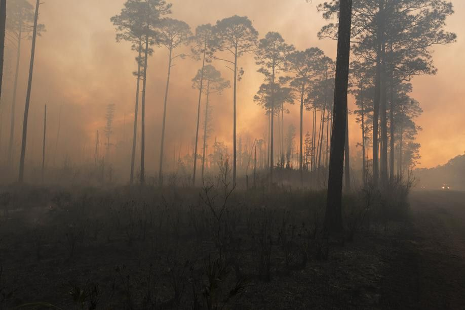 West Mims fire activity falls, allowing Okefenokee National ...