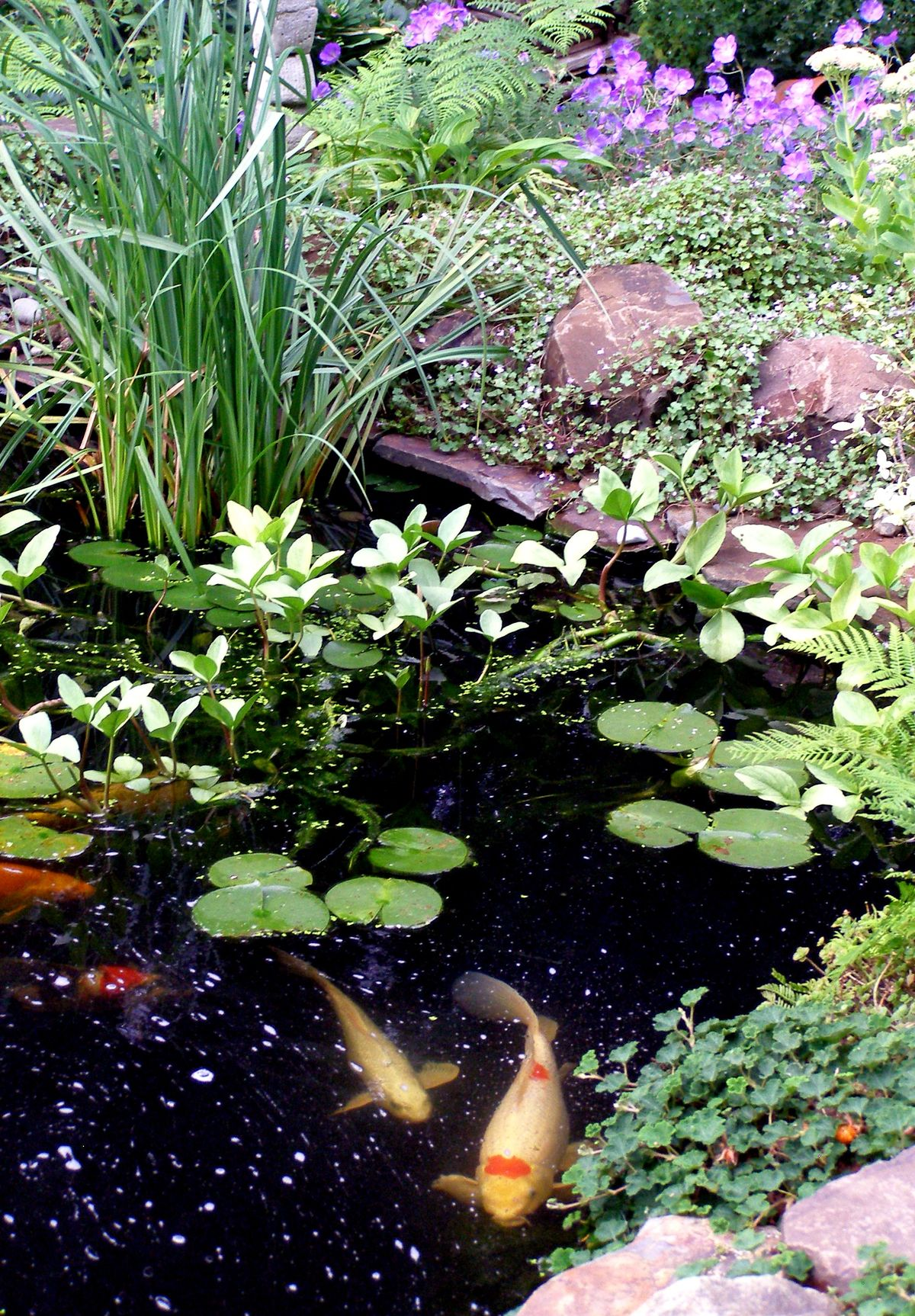 Outdoors water features on pinterest backyard ponds koi for Koi water garden