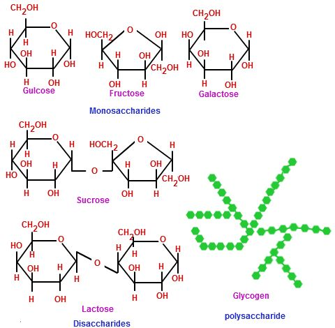 Biological Molecules | Chemistry@TutorVista.com
