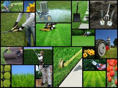 Lawn Care Tips | Do It Yourself Tips and Advice