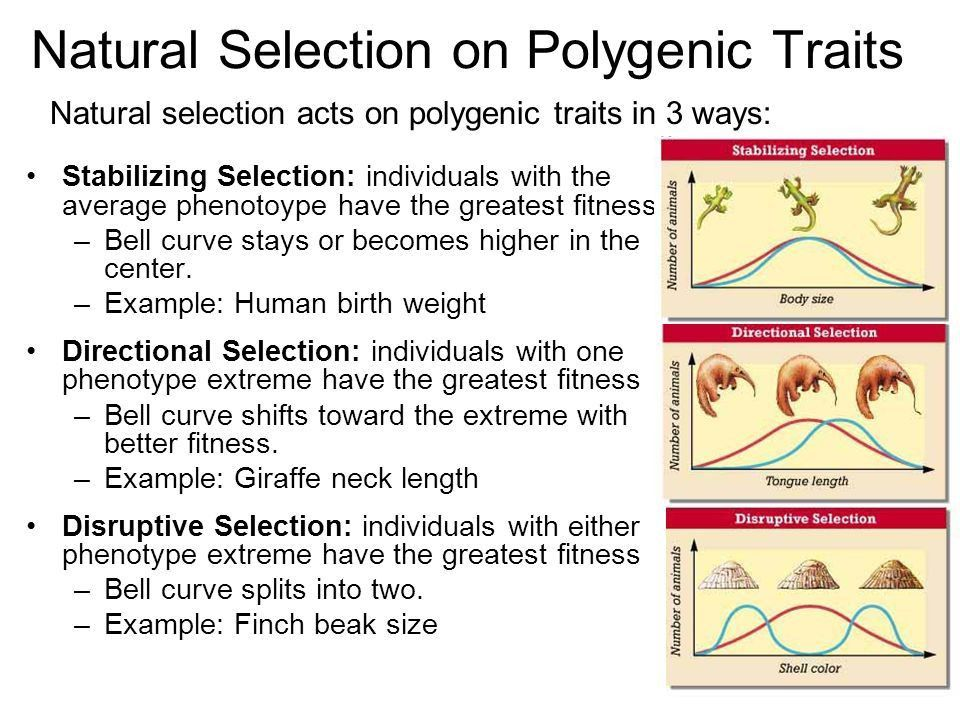 Illustrated Example of Evolution by Natural Selection - ppt video ...