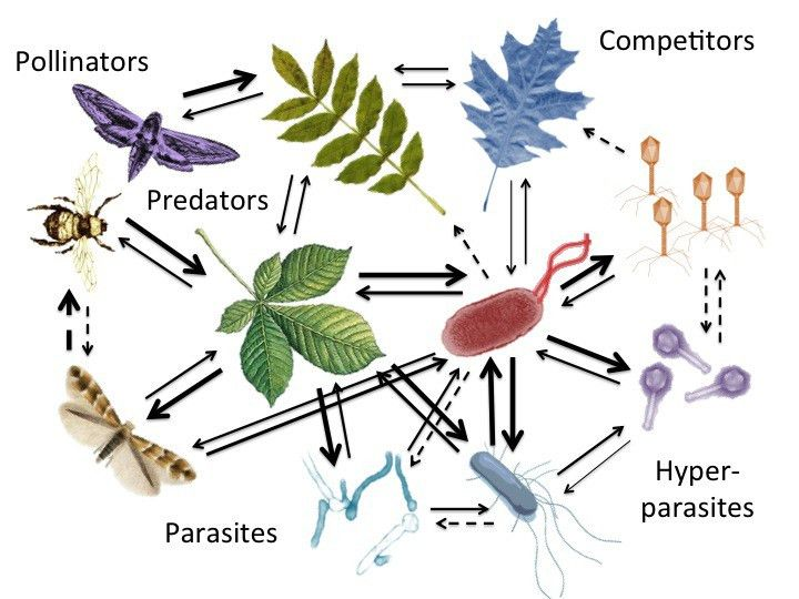 coevolution – Koskella Lab at UC Berkeley