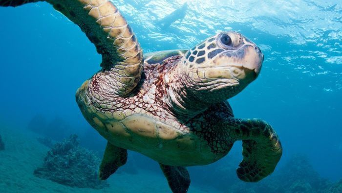 What is a job description for marine biology?   Reference.com