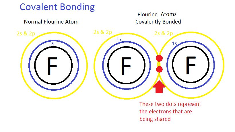 Chemical Bonds : Anatomy & Physiology