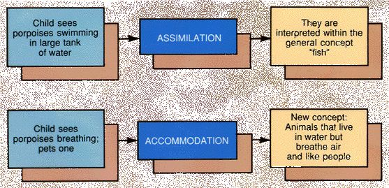 Assimilation & Accommodation - Mr. McNabb