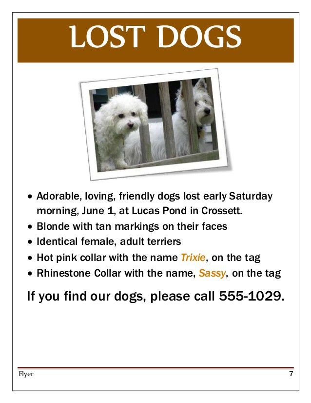 Pets Flyer Templates   PosterMyWall
