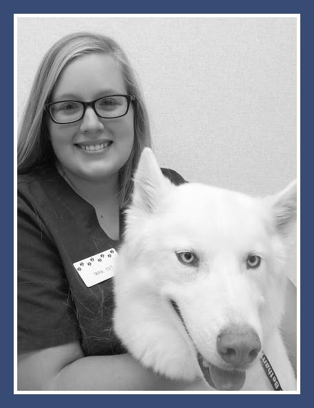 Bethany Animal Hospital - Veterinarian in Sycamore, IL