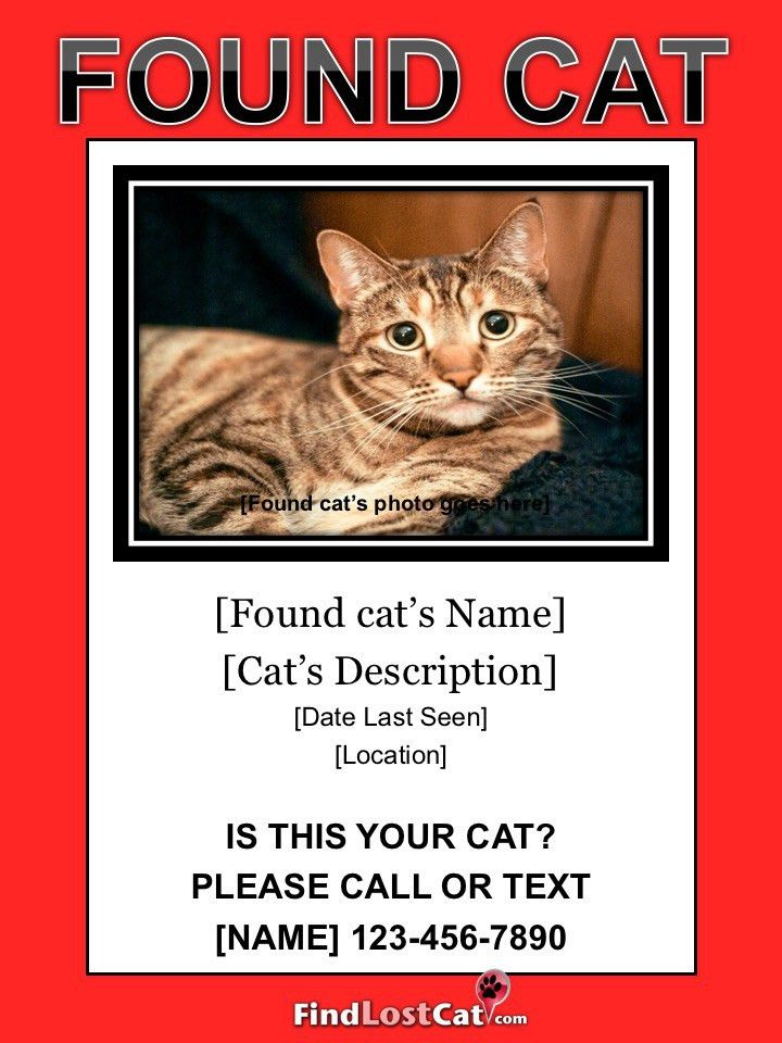 Lost Cat Flyer & Poster Templates - Free Downloads