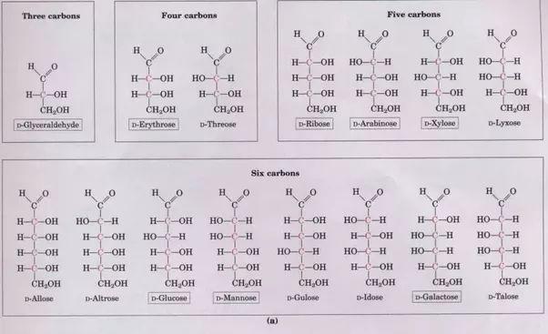 Examples of monosaccharides - Quora
