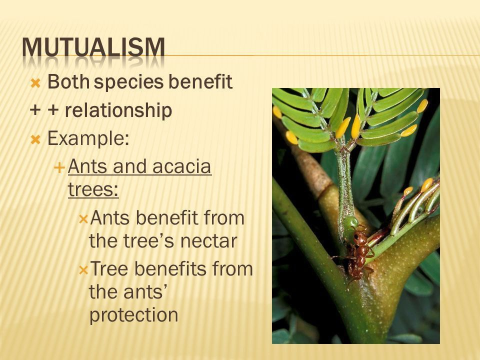 Orchids and trees Ticks and dogs Ants and acacia trees. - ppt ...
