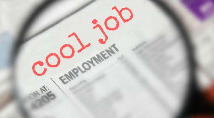Cool Job Alert Archives - bungalower
