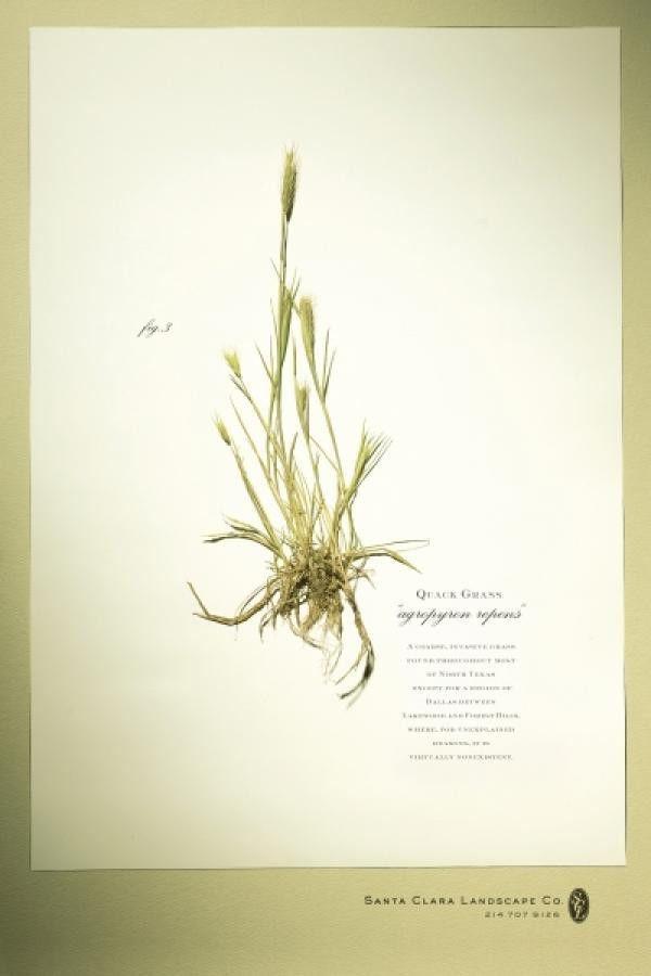 """Landscape Service: """"QUACK GRASS"""" Print Ad by DDB Dallas"""