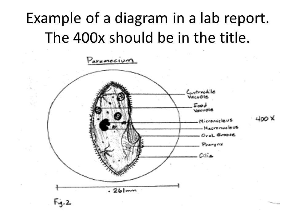 So, how do I make 10/10 on my lab report? - ppt video online download