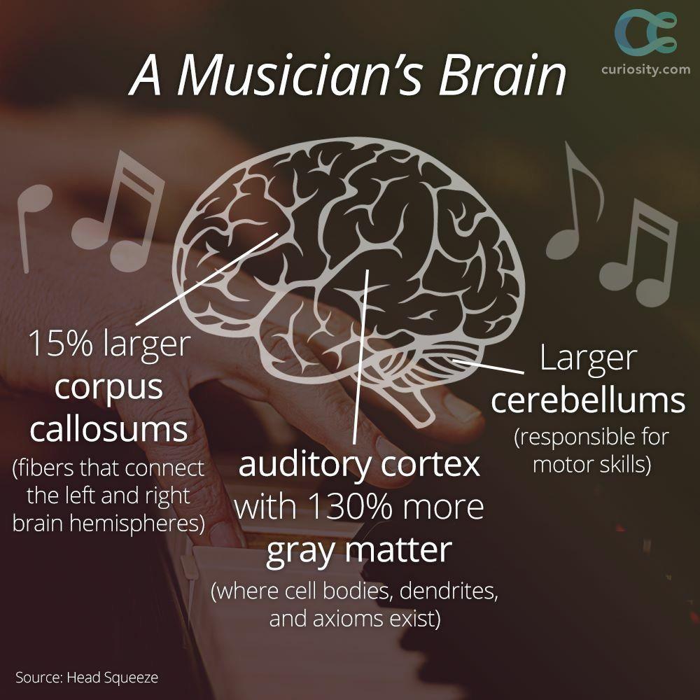 A musician's brain