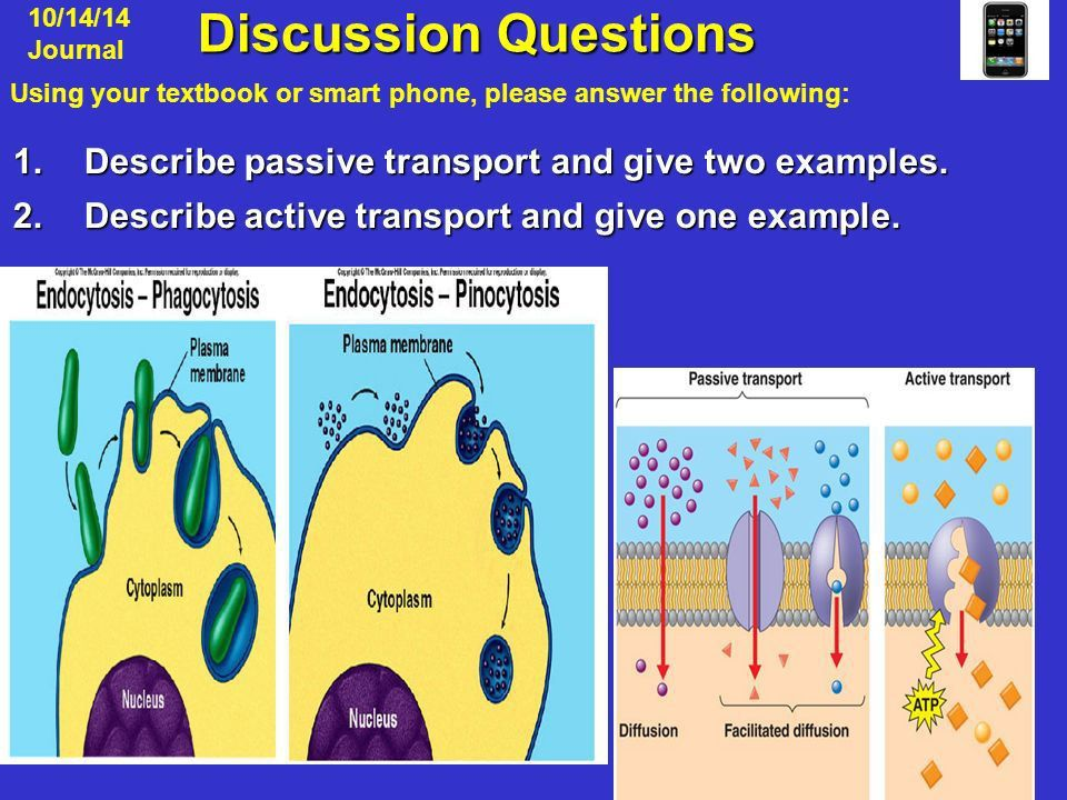 Discussion Questions Discussion Questions 1.Describe passive ...