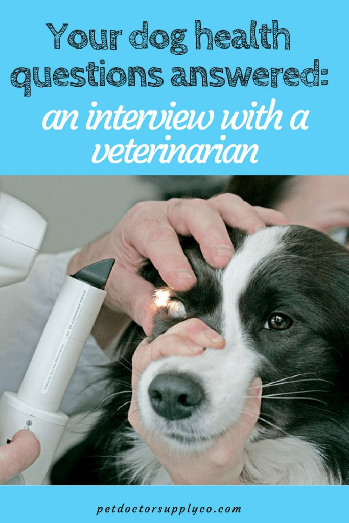 An Interview with a Veterinarian: Dog Health Questions Answered ...