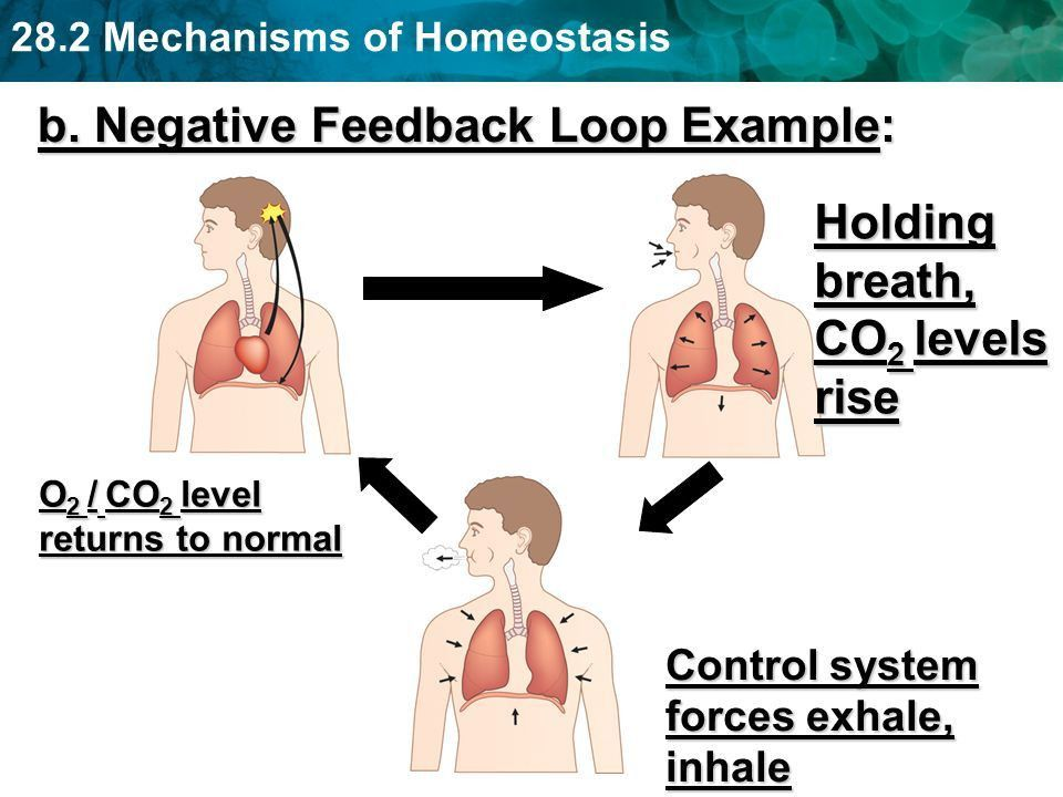 """Section 28-2 """"Homeostasis"""" - ppt download"""
