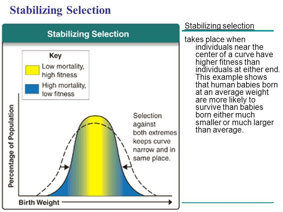 Modern Synthesis Natural Selection's effects on a Population's ...