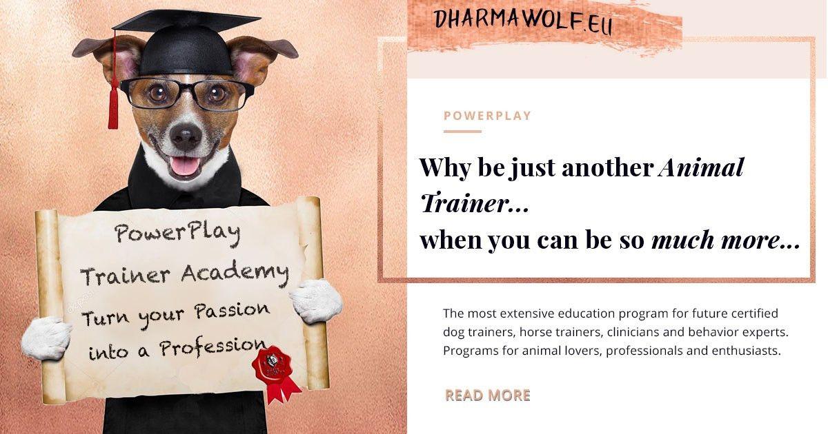 DharmaWolf - Academy