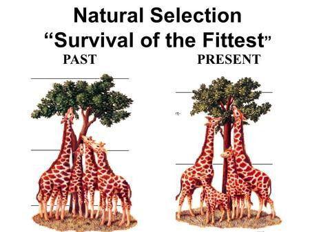 Evolution by Natural Selection - ppt video online download