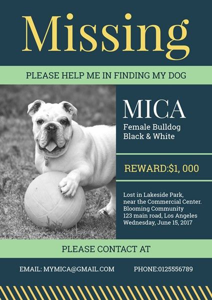 Lost Dog Poster Template Create Flyer Lost Pet Flyers 15 Free – Lost Dog Poster Template