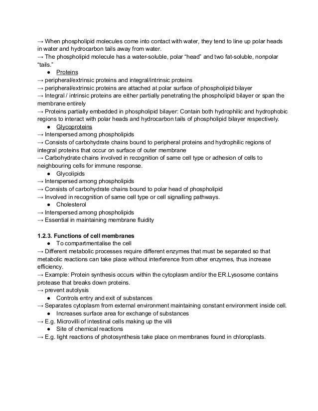 Bio Notes (Homeostasis, Biomolecules)