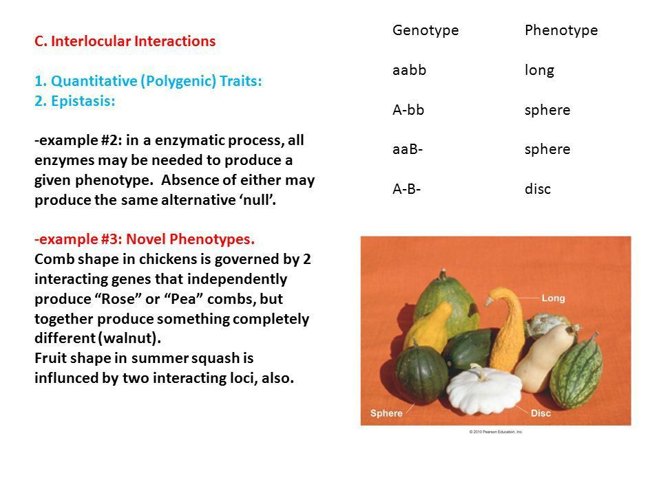 Modifications to Mendelian Inheritance I. Allelic, Genic, and ...