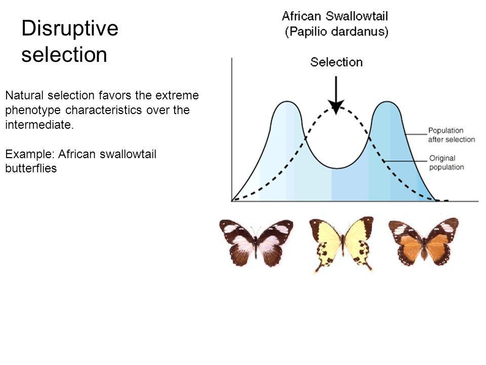 Patterns of Selection and Speciation - ppt video online download