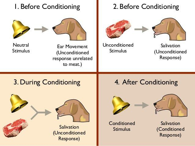 Behavior, Learning, Classical Conditioning