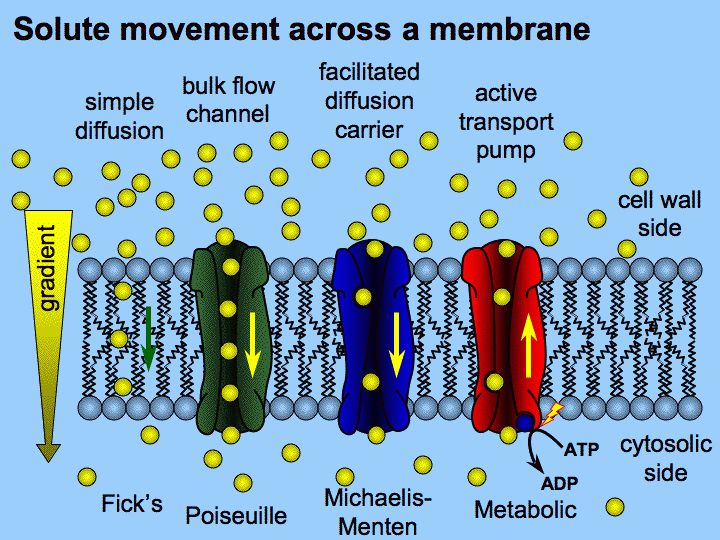How do active transport and bulk movement differ? | Socratic