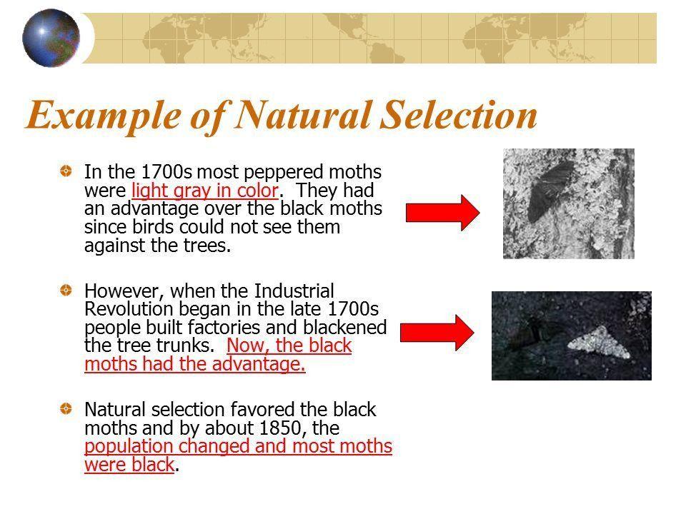 Evolution How do organisms change over time? - ppt video online ...
