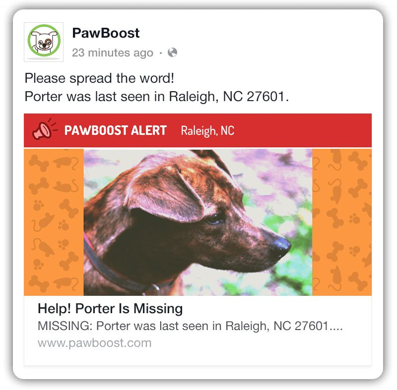 Find Your Lost Pet