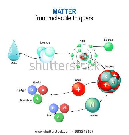 Telomere Cell Division Stock Vector 488807065 - Shutterstock