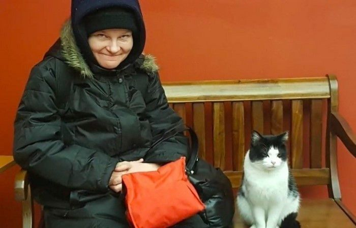 Stray Cat Snuck Into A Nursing Home, And Got An Adorable Job.