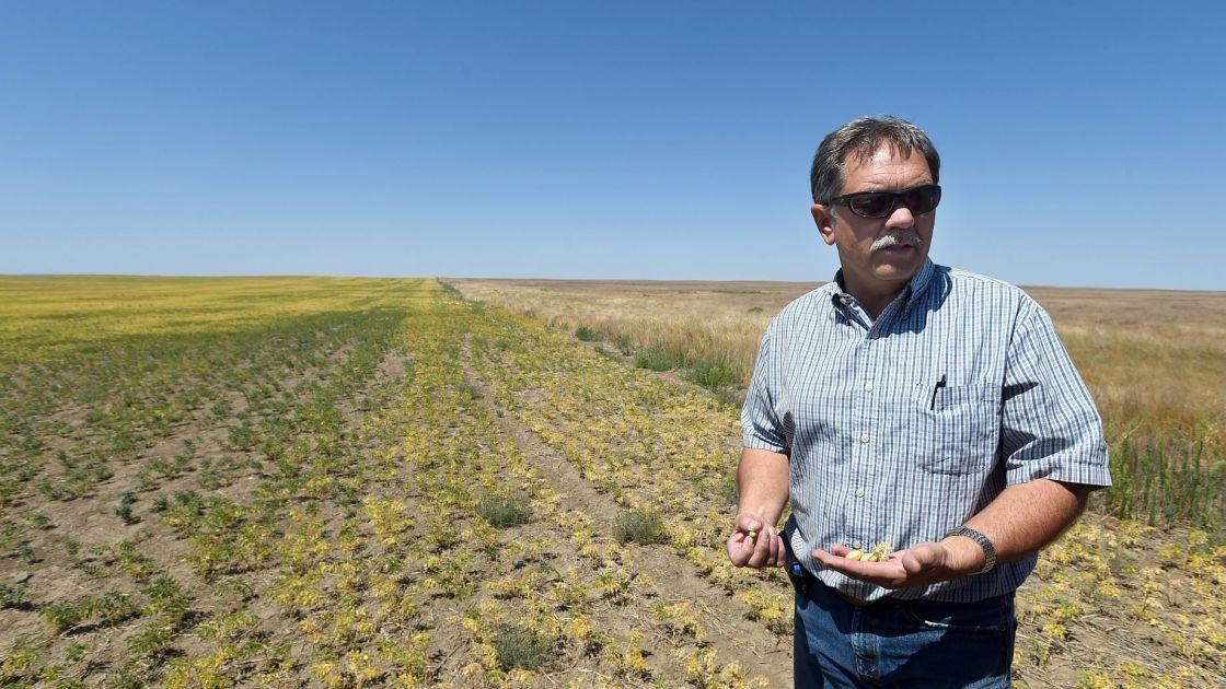 Hi-Line farmers feeling drought's burn | Business ...