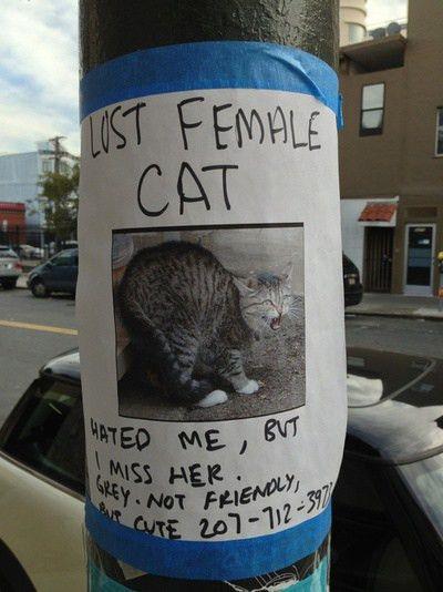 Best 25+ Lost cat poster ideas on Pinterest   Black cat images ...