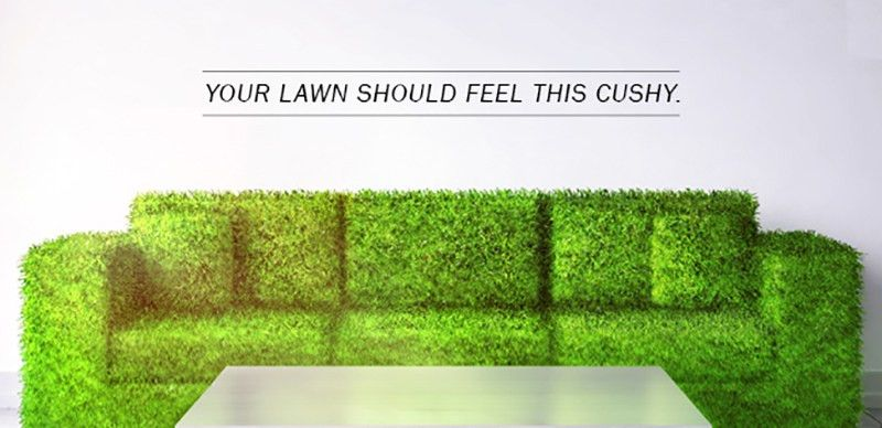 Lawn Care Services Near Me | Lawn Maintenance | Lawn Doctor