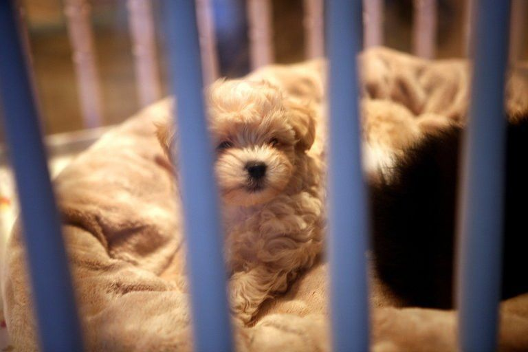 California 'Puppy Mill' Ban Would Also Cover Kittens and Bunnies ...