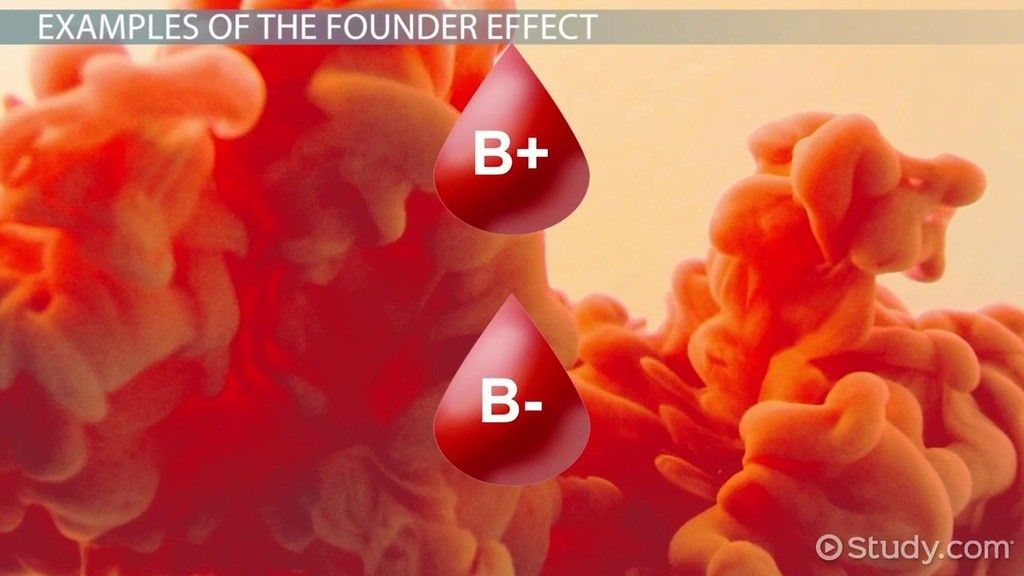 Founder Effect: Example & Definition - Video & Lesson Transcript ...