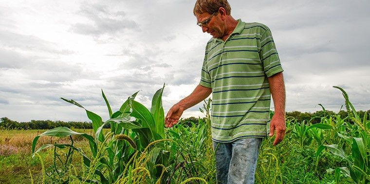 This farmer fought the government to keep his farm sustainable | Ensia