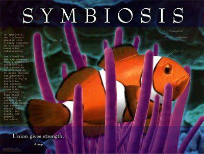 rotoriubw - symbiosis mutualism commensalism parasitism examples