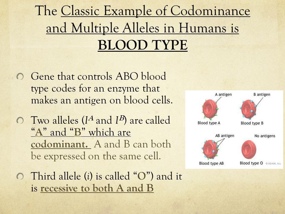 Blood Type and Sex Linked Inheritance. Multiple Alleles Multiple ...