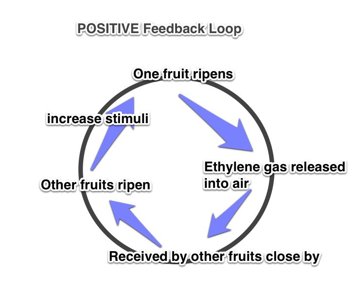 2.C.1: Organisms use Feedback Mechanisms to Maintain Their ...