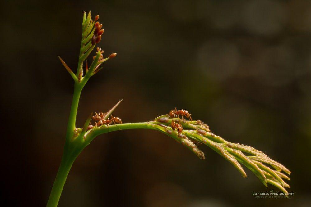 Deep Green Photography macro stock photos — Deep Green Photography